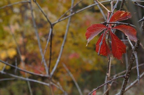 Безкоштовне стокове фото на тему «bramble, великий лист, Гілка дерева, гілки»