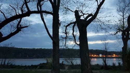 Free stock photo of dead trees, riverside