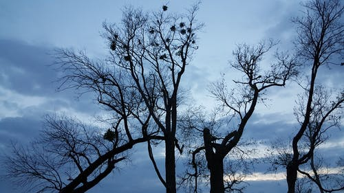 Free stock photo of cloudy sky, dead trees, silhouette of dead trees at dusk