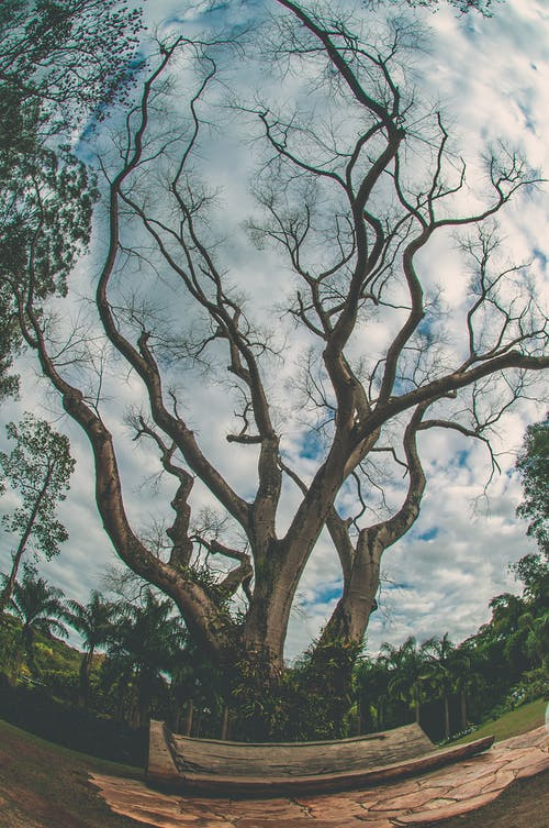 Free stock photo of tree branches