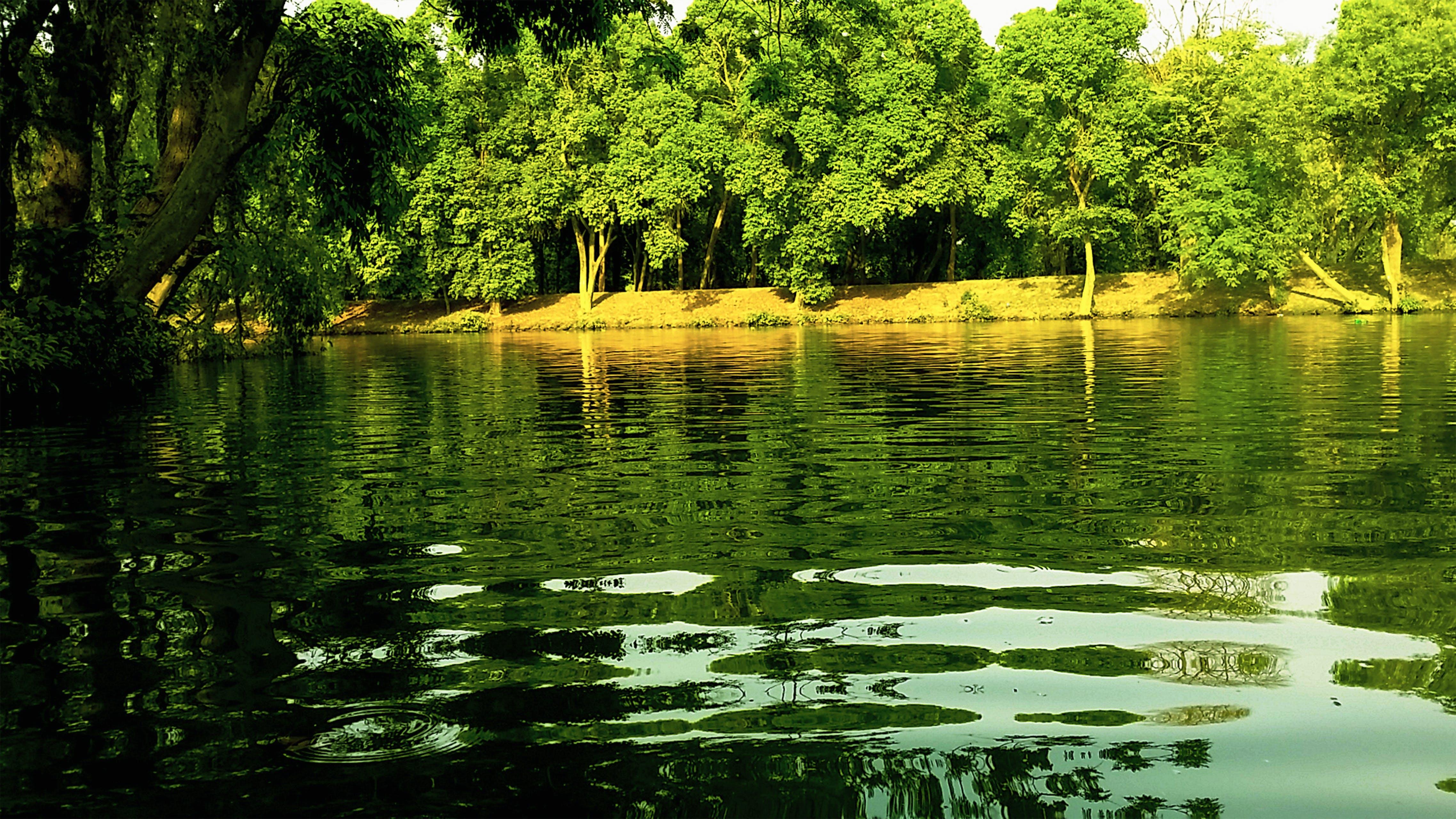 Free stock photo of Beauty of Lahore, green, green lake, green pakistan