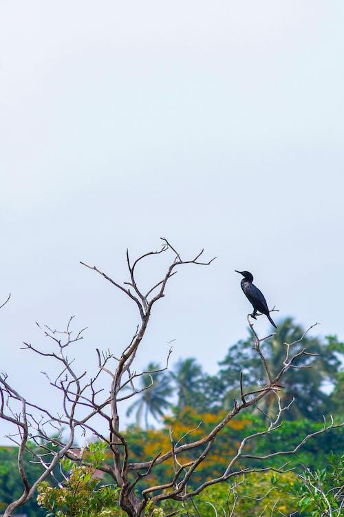 Δωρεάν στοκ φωτογραφιών με ομορφιά στη φύση, παρατήρηση πουλιών, φύση
