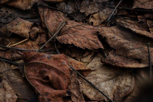Darmowe zdjęcie z galerii z brązowy, ciemny, flora, głębia pola