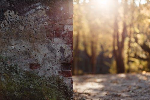 Photos gratuites de abandonné, arbres, briques, brisé