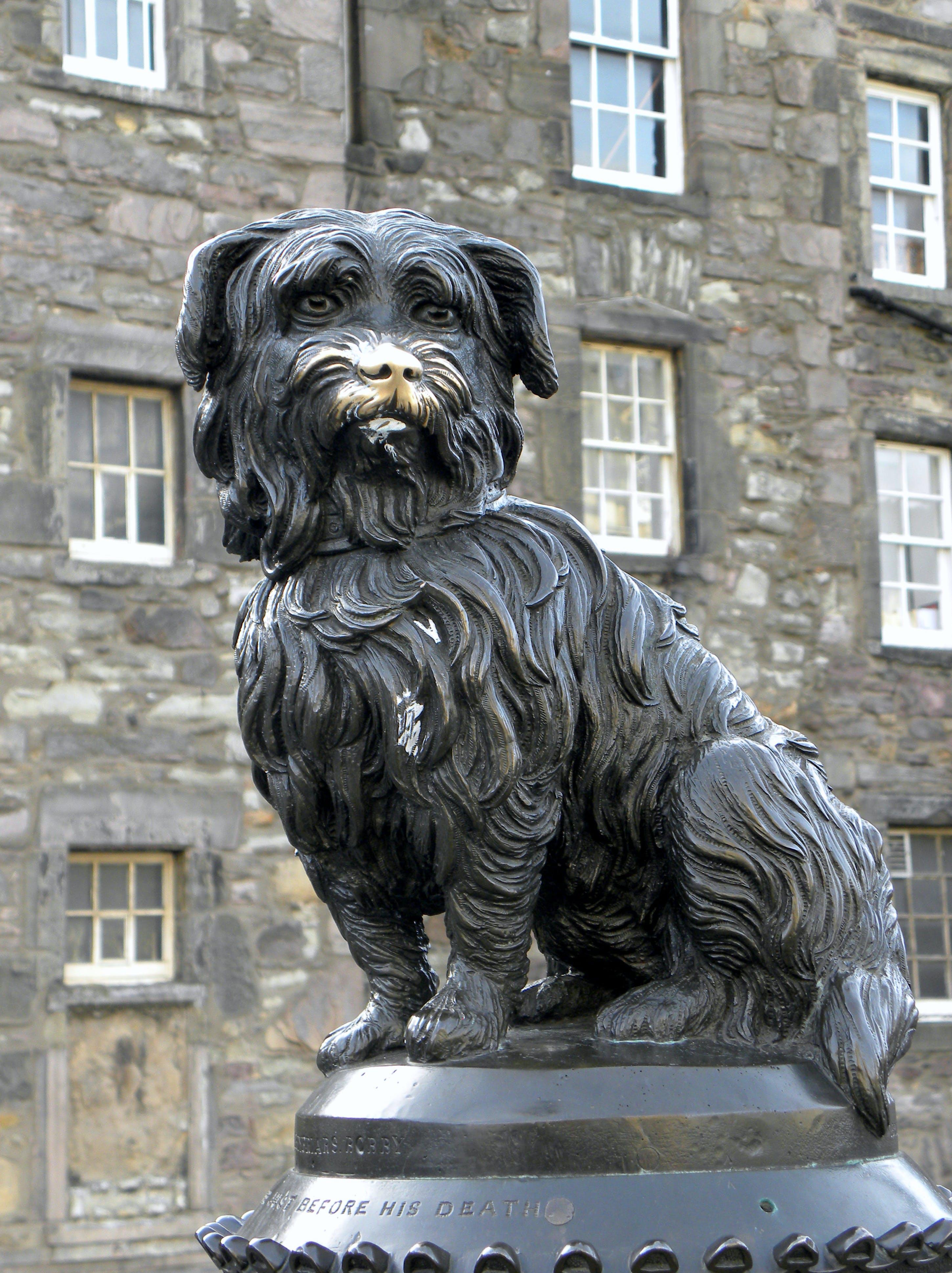 Kostenloses Stock Foto zu denkmal, edinburgh, hund, skulptur