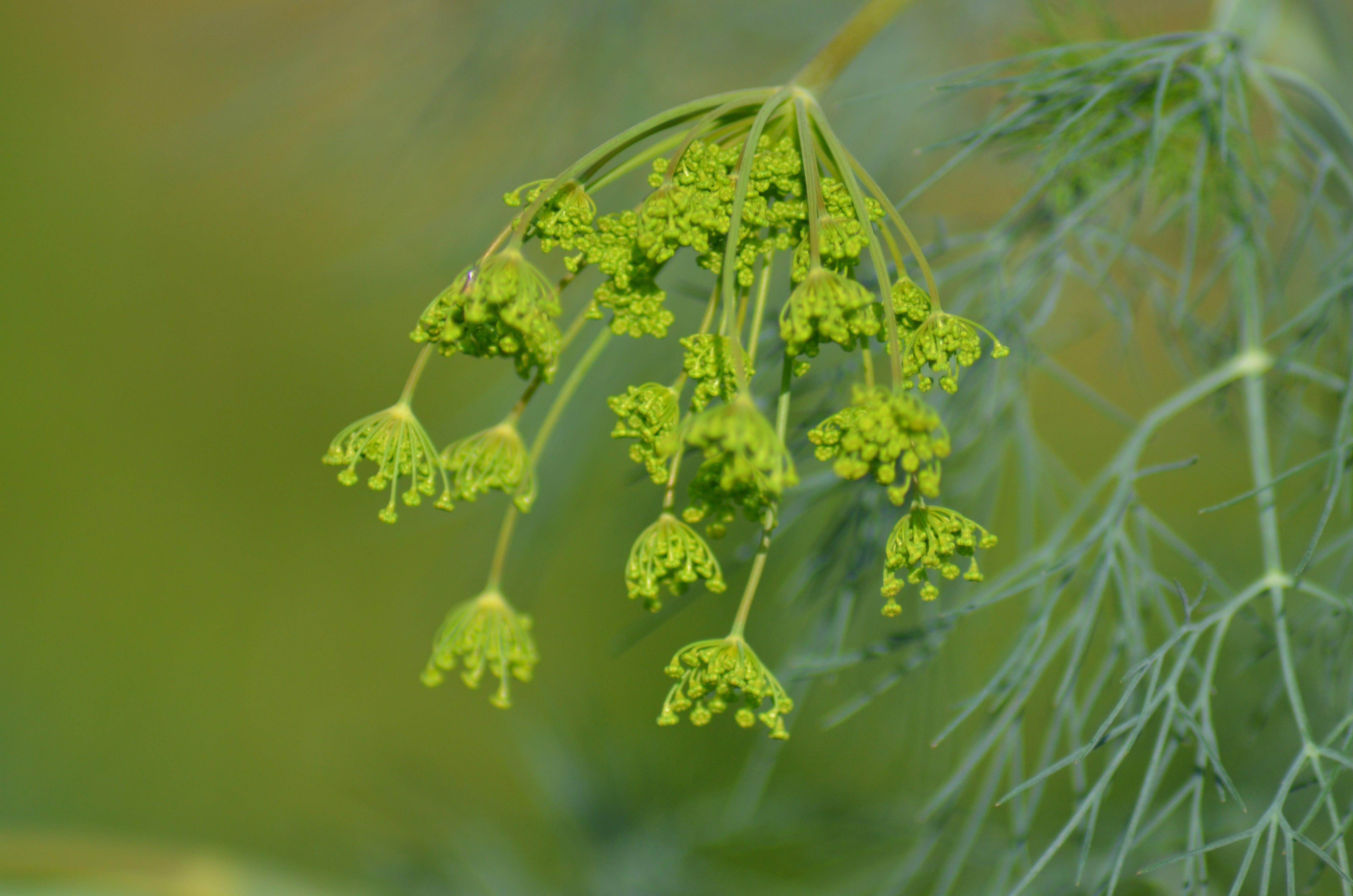 식물의 무료 스톡 사진