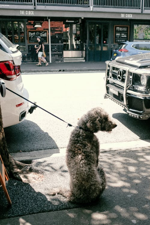 Gratis lagerfoto af asfalt, biler, by, dagtimer