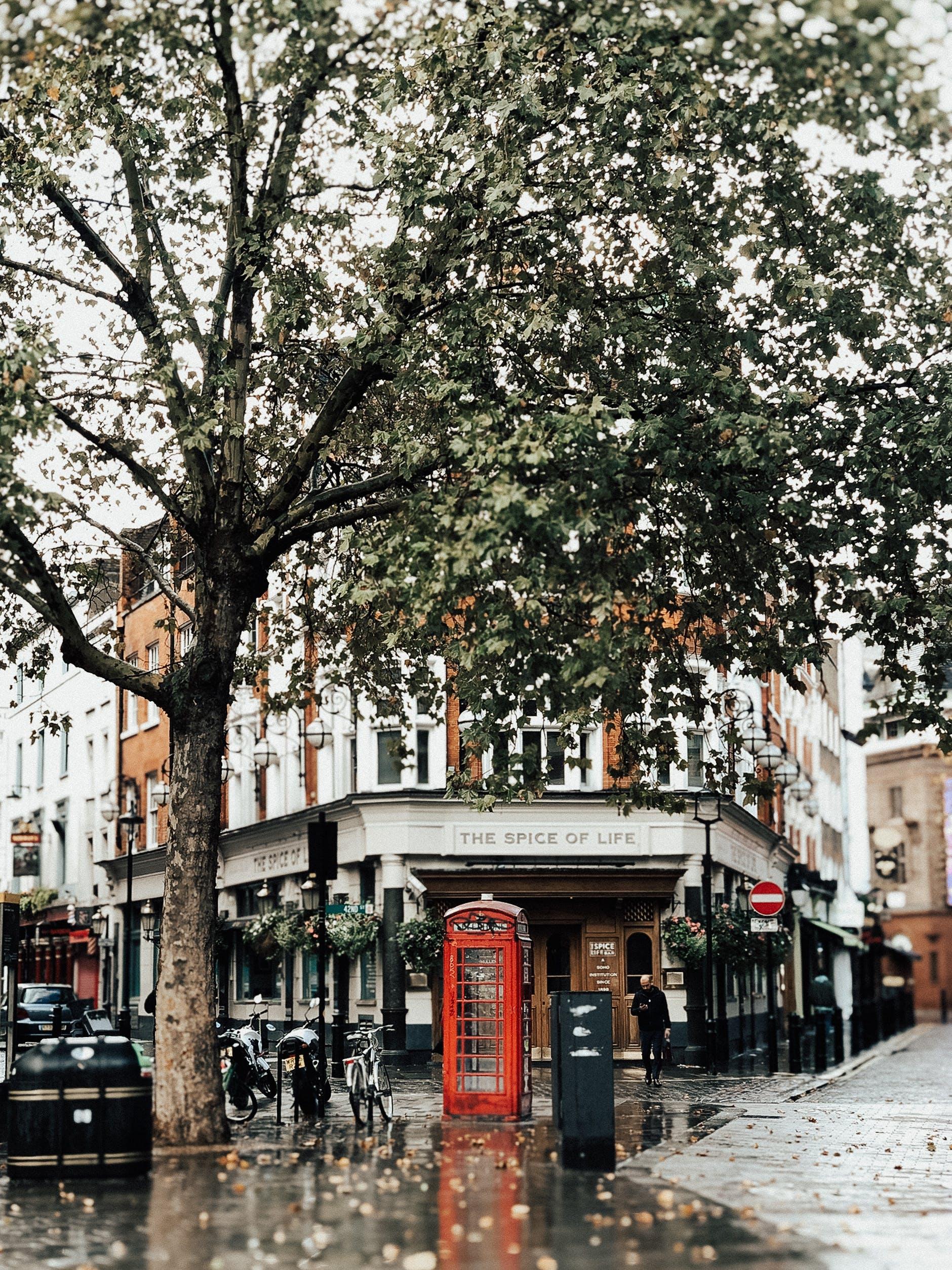 Imagine de stoc gratuită din arbore, arhitectură, autoturisme, cabină telefonică