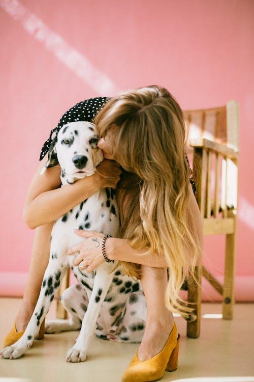 Gratis lagerfoto af blond hår, dalmatiner, hund, indendørs
