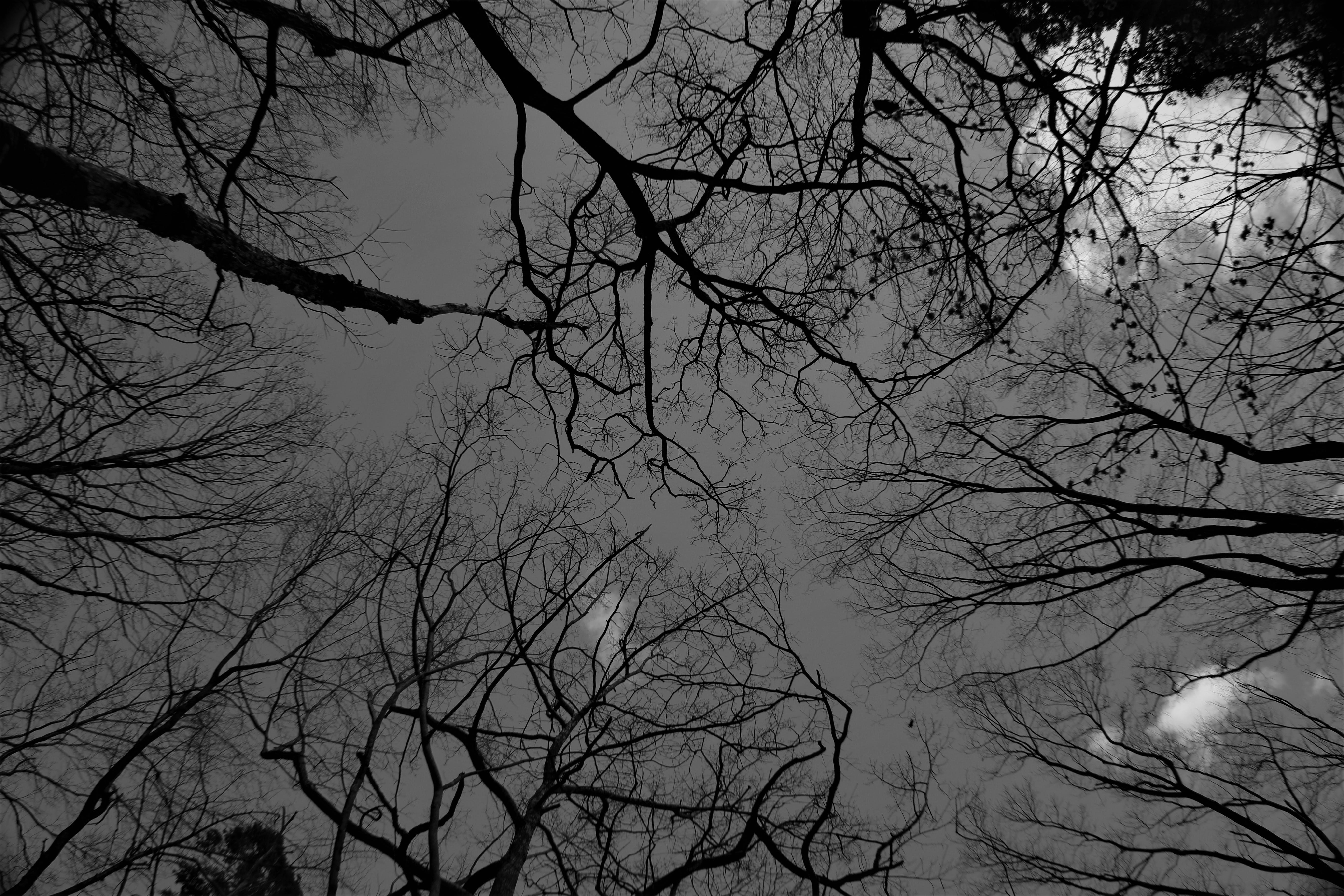 Free stock photo of black and white, Dark Sky, trees