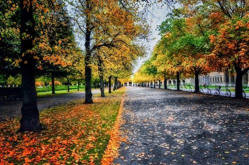 Gratis stockfoto met bomen, daglicht, decor, gras