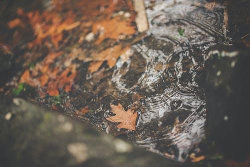 Foto stok gratis air, aliran, daun gugur, daun musim gugur