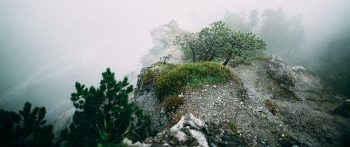 Free stock photo of flower, mountain, stone