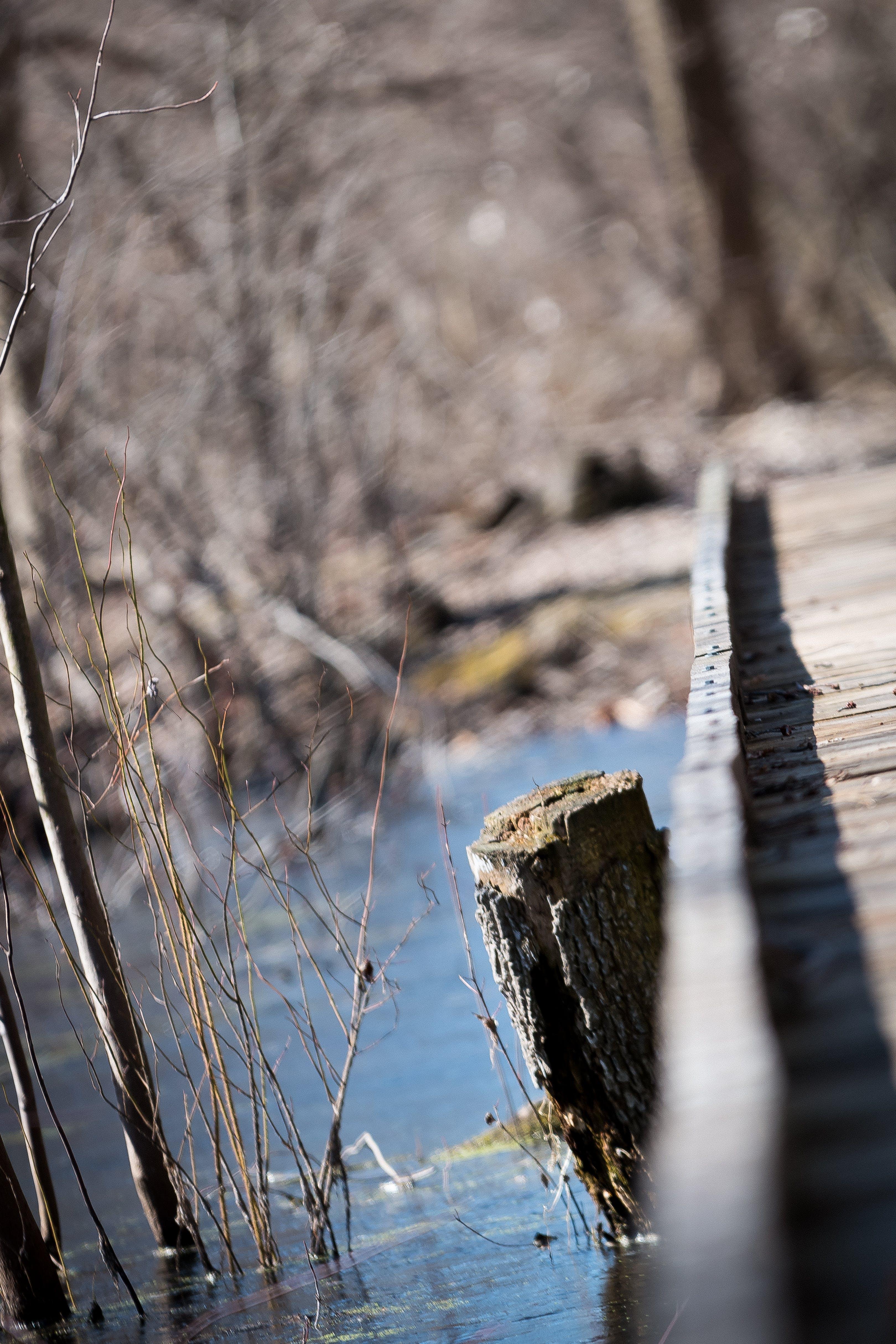 Základová fotografie zdarma na téma most, pařez, stromy