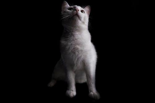 #mobilechallenge, 動物肖像, 坐, 專注 的 免费素材照片