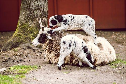 Gratis lagerfoto af baby, beacon hill park victoria, dyr, familie