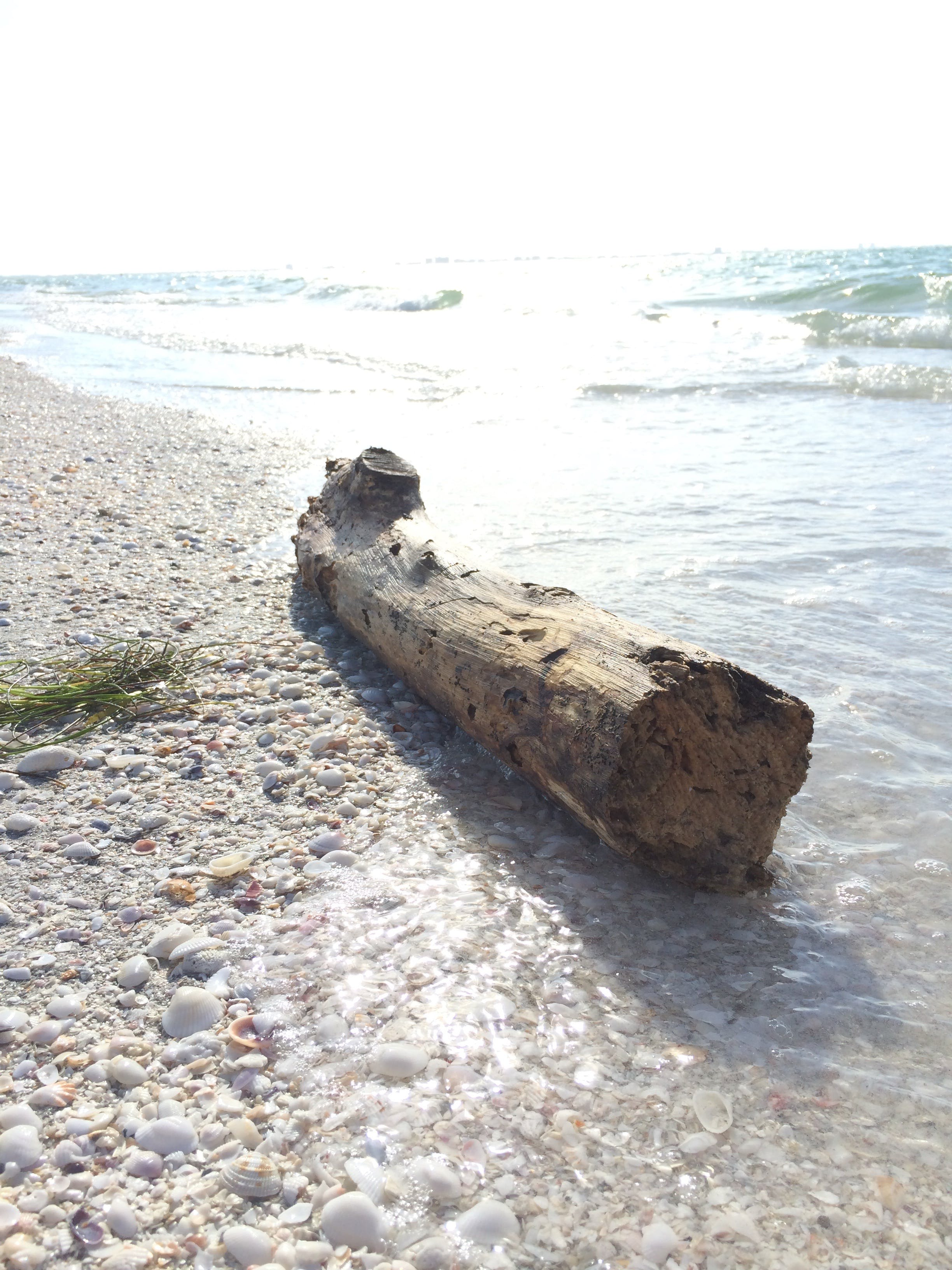 Free stock photo of beach, driftwood