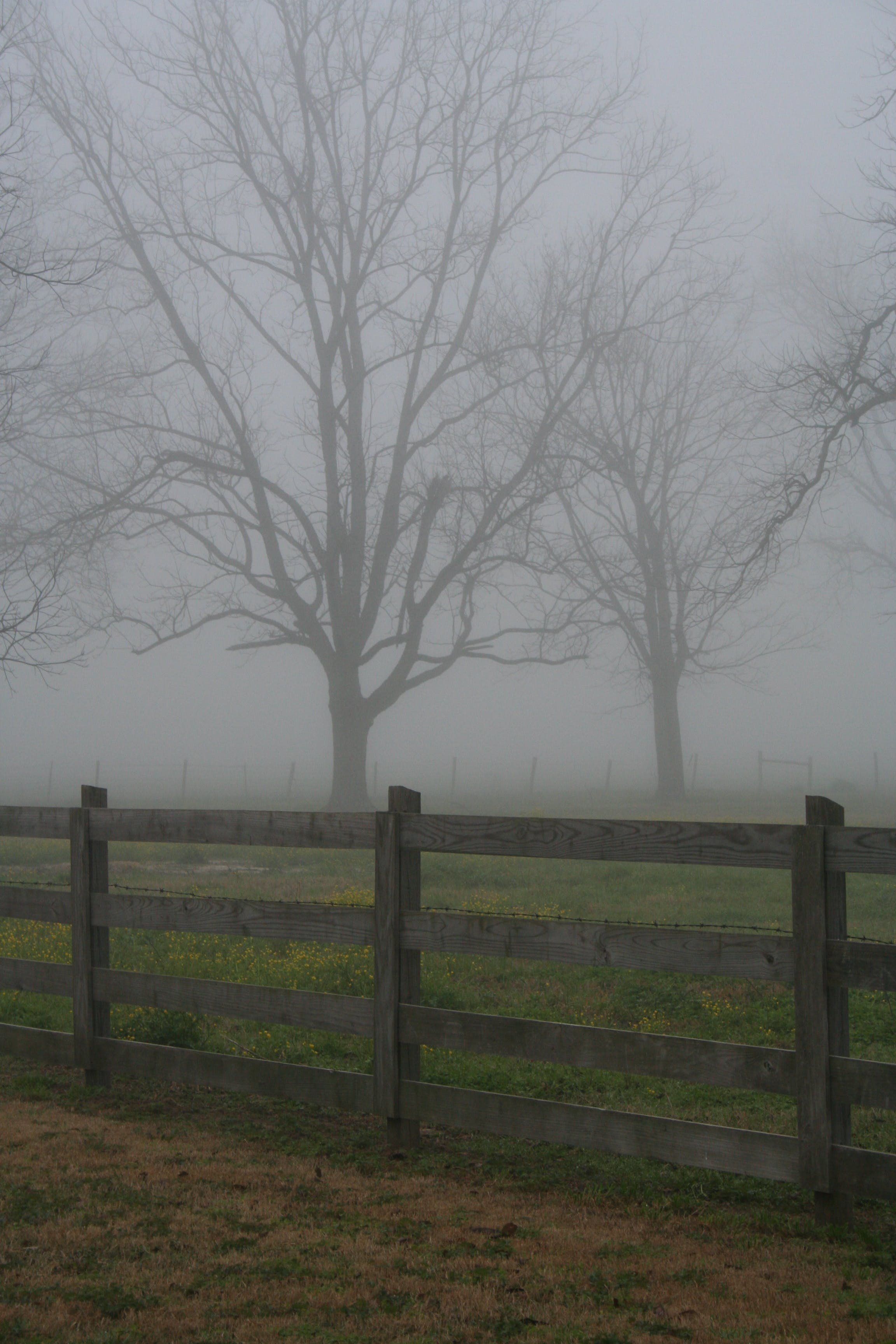 Free stock photo of bare trees, fog, wooden fence