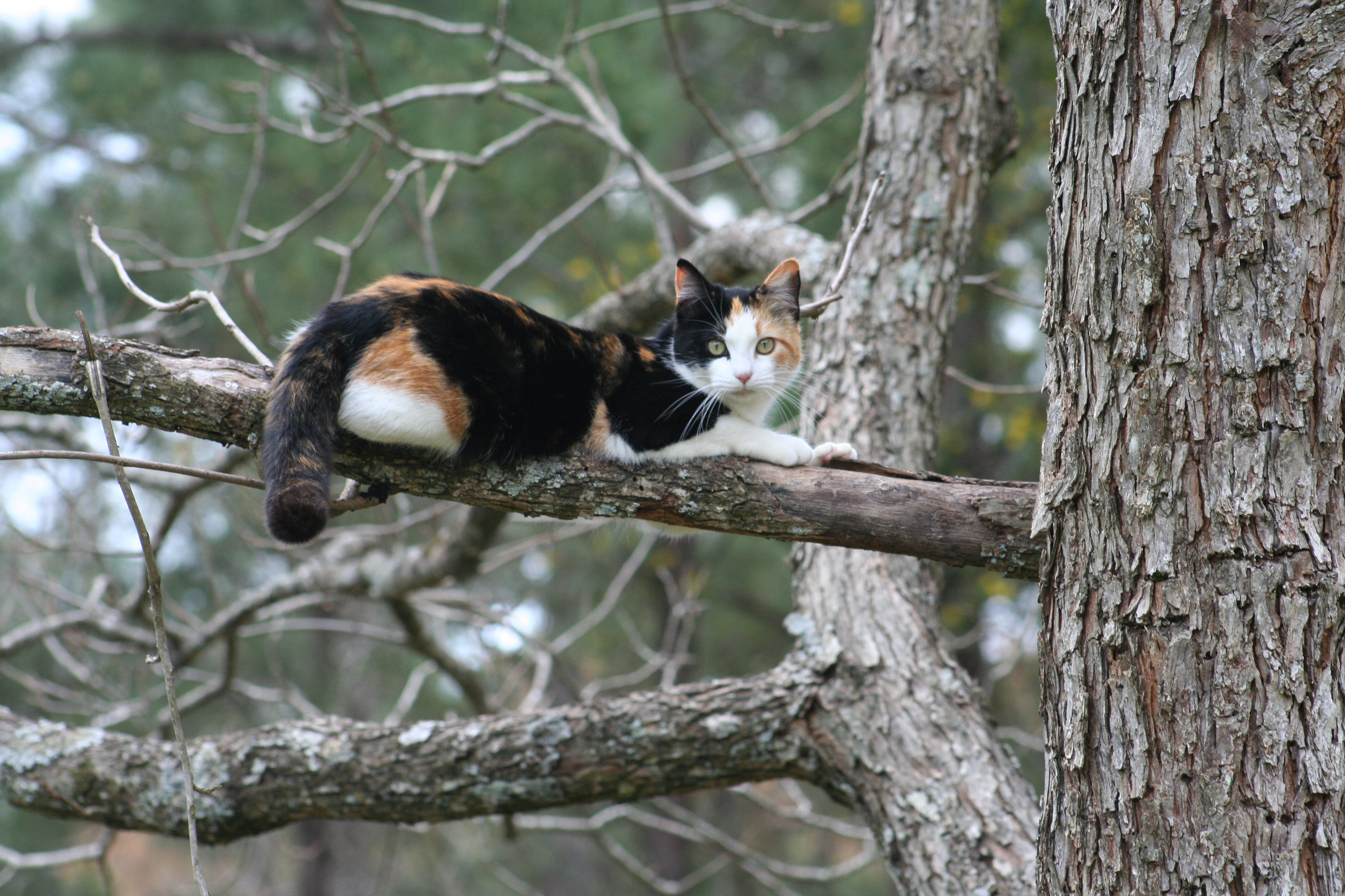 Free stock photo of cat, tree