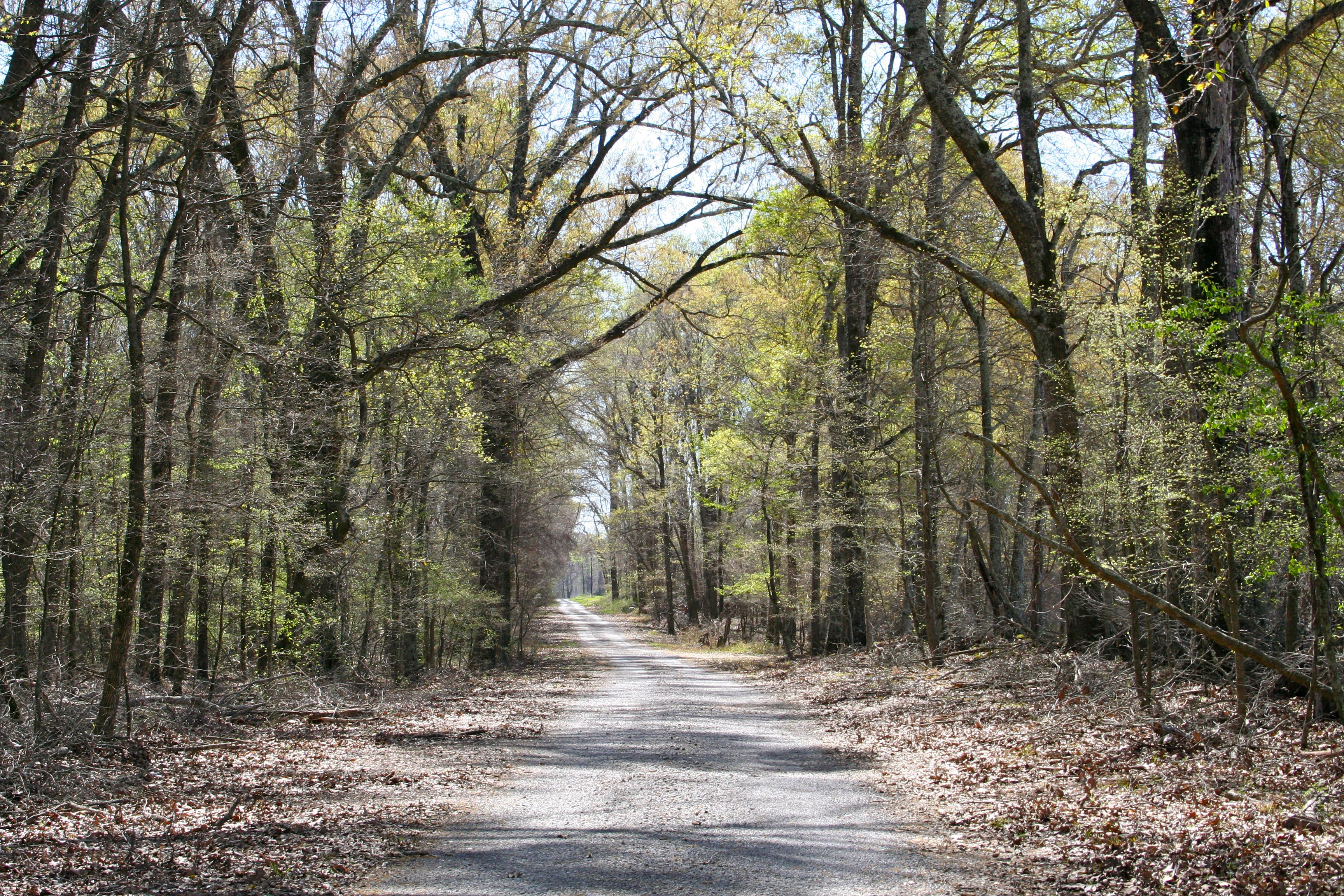 Free stock photo of country road, louisiana