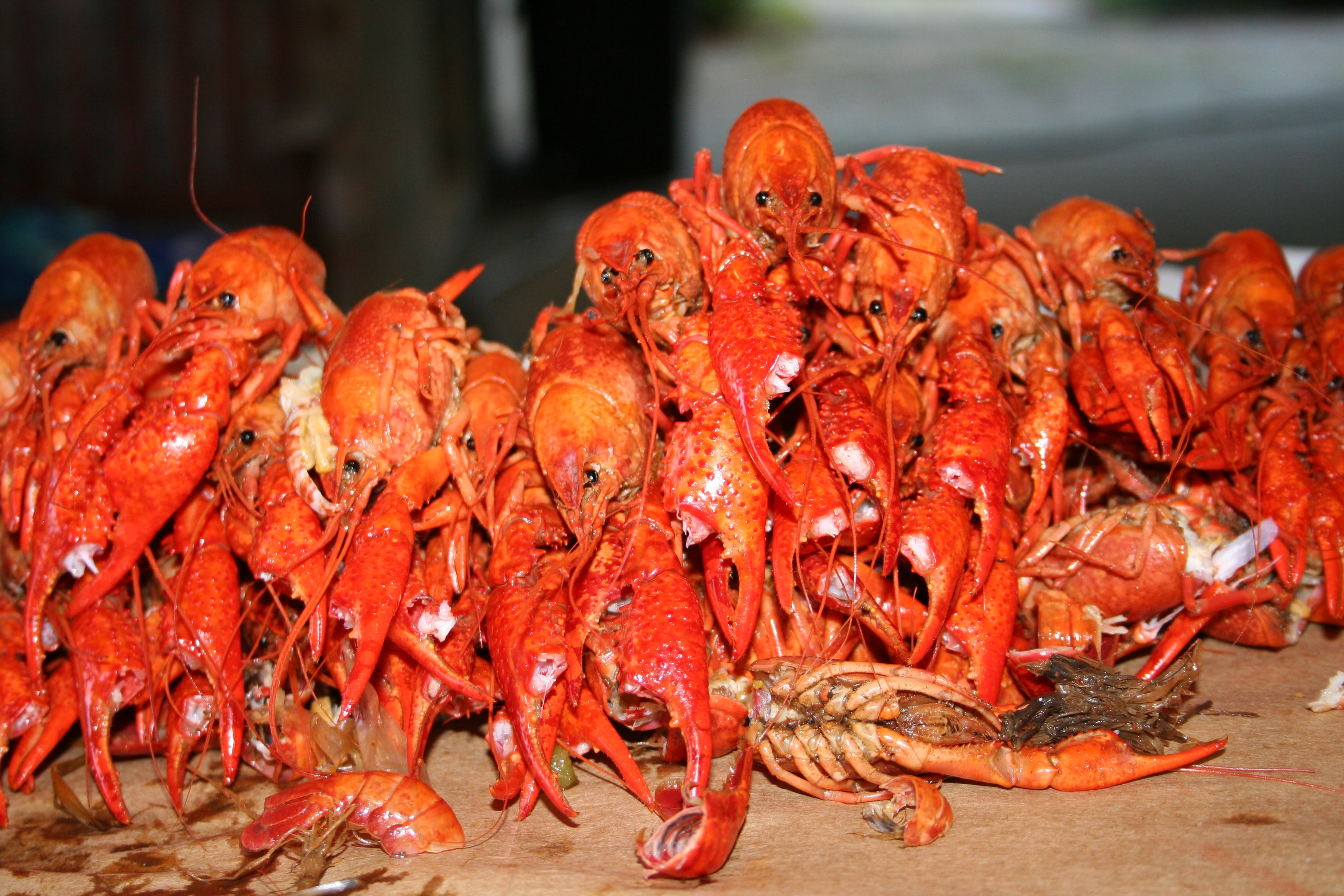 Free stock photo of crawfish boil, louisiana