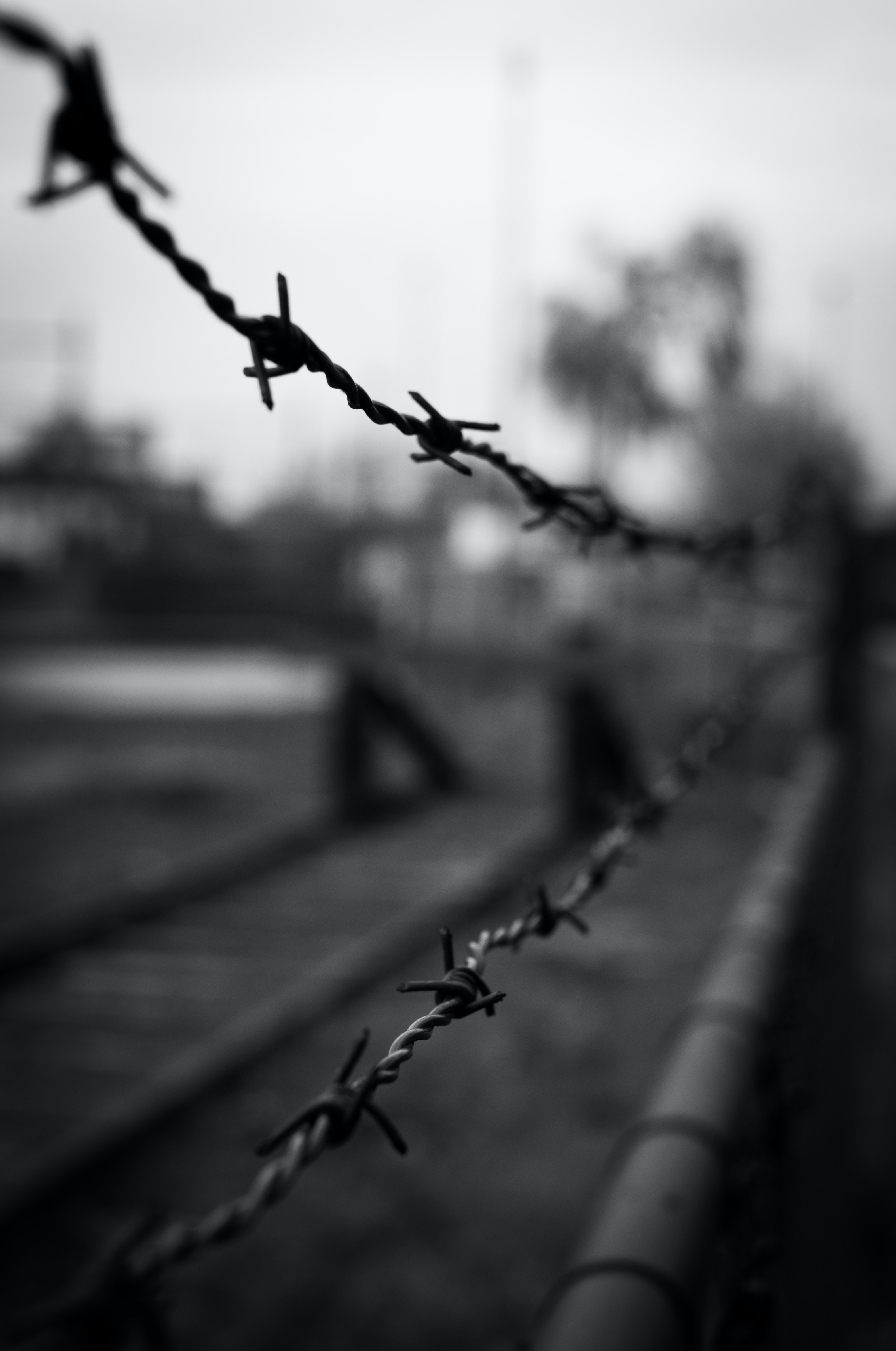 Free stock photo of barbed wire, black-and-white, crime