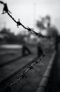 black-and-white, fence, crime