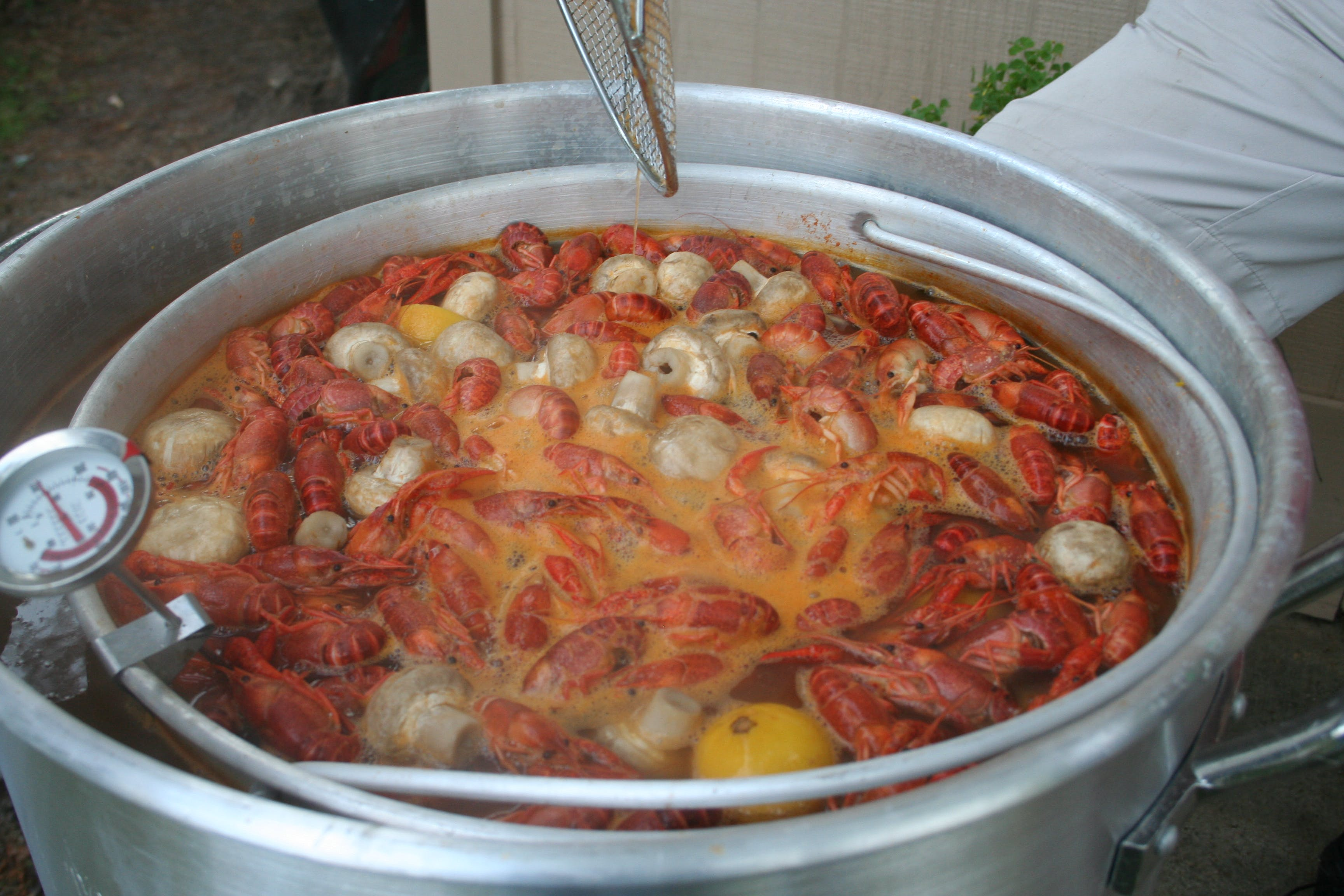 Free stock photo of crawfish boil