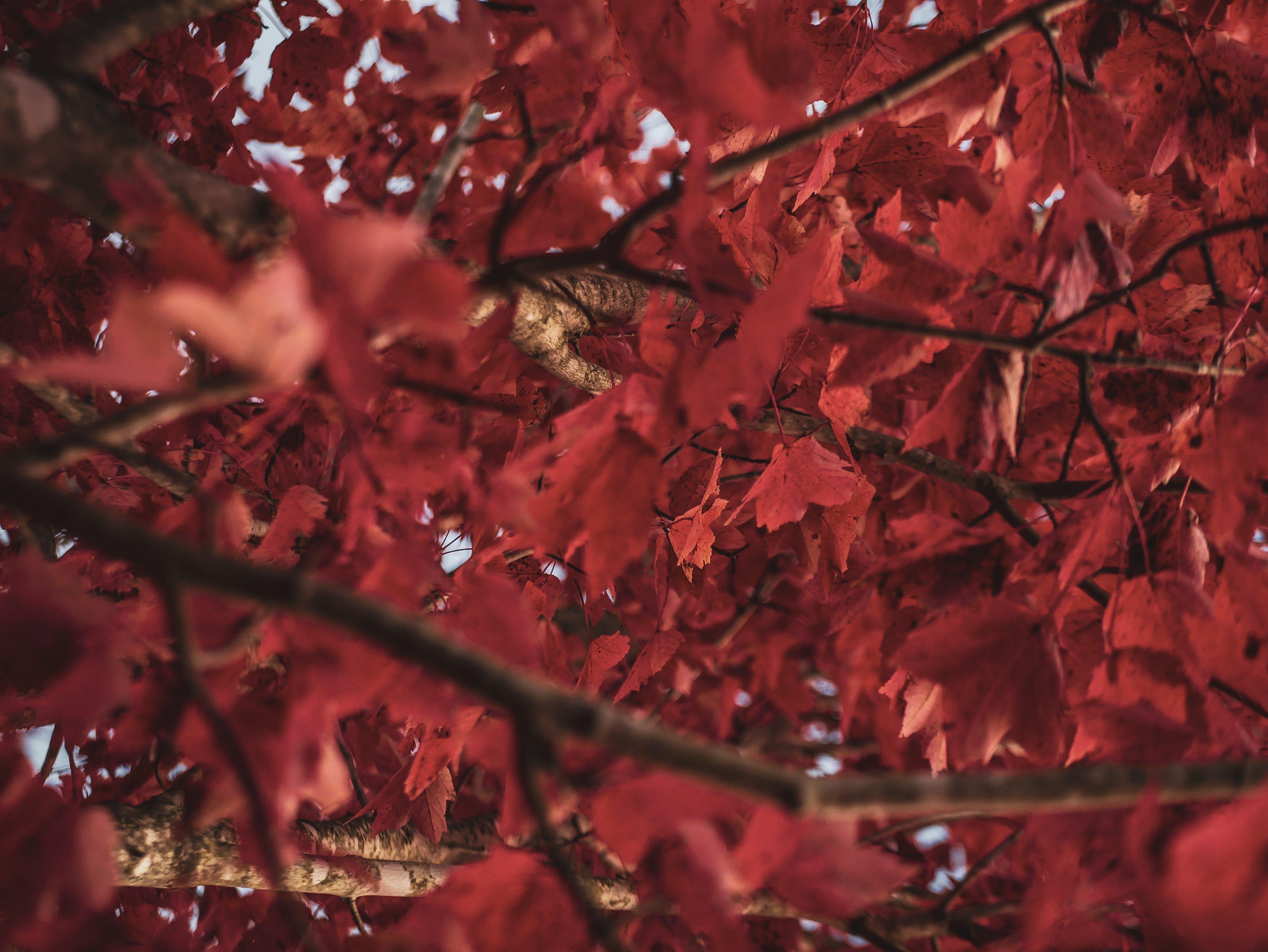 Imagine de stoc gratuită din adâncime de câmp, anotimp, arbore, crengi