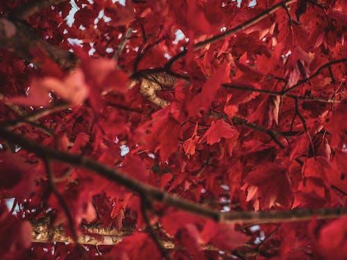 Ảnh lưu trữ miễn phí về cận cảnh, cây, chi nhánh, hệ thực vật