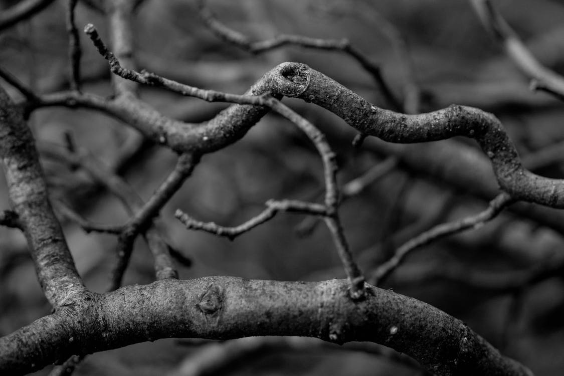 luonto, mustavalkoinen, puut