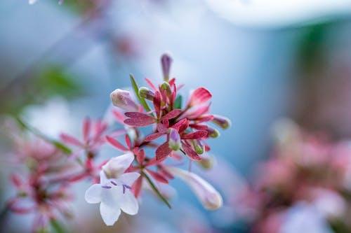 Δωρεάν στοκ φωτογραφιών με macro, λουλούδια, όμορφα λουλούδια, φύση