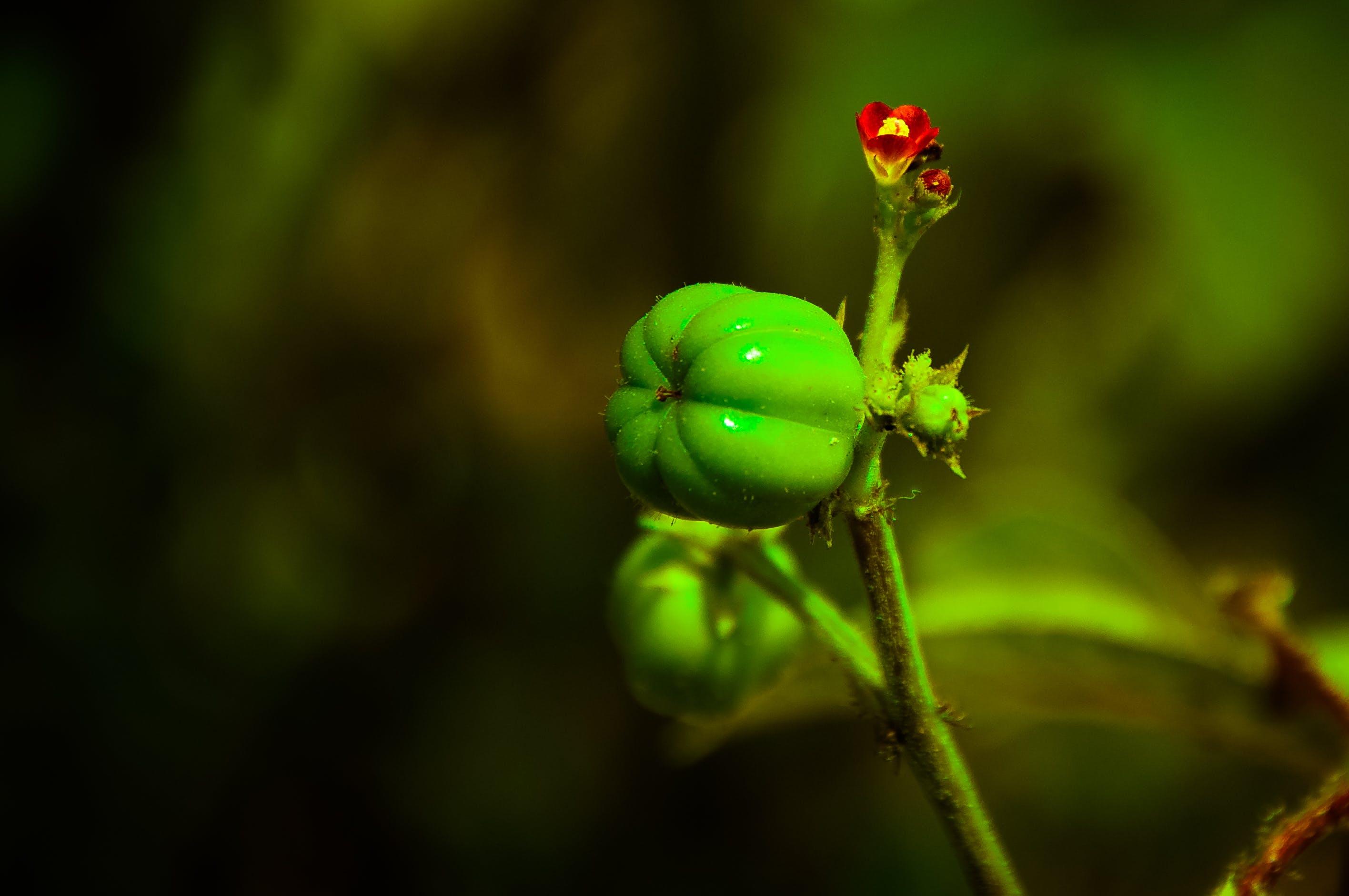 Free stock photo of beauty in nature, garden, green, macro