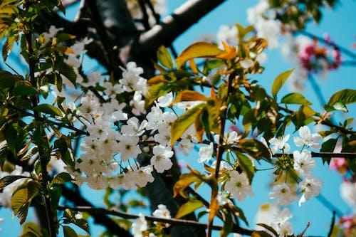 Безкоштовне стокове фото на тему «відділення, дерево, квіти, квітучий»