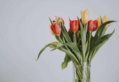 Ảnh lưu trữ miễn phí về bình hoa, bó hoa, cắm hoa, cận cảnh