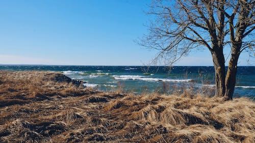 Gratis stockfoto met boom, golven, lucht, natuur