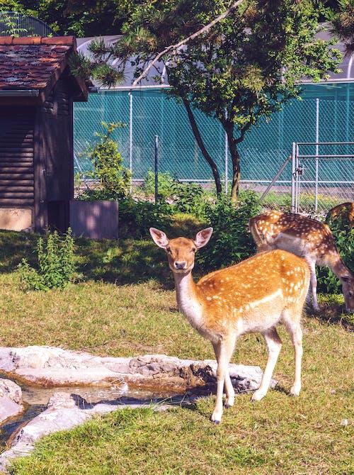 Základová fotografie zdarma na téma jelen, příroda, zvíře
