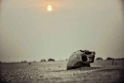 Gratis lagerfoto af dybt hav, klit, kranium, landskab