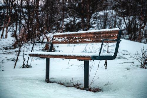 Fotos de stock gratuitas de al aire libre, banco, clima helado, congelado