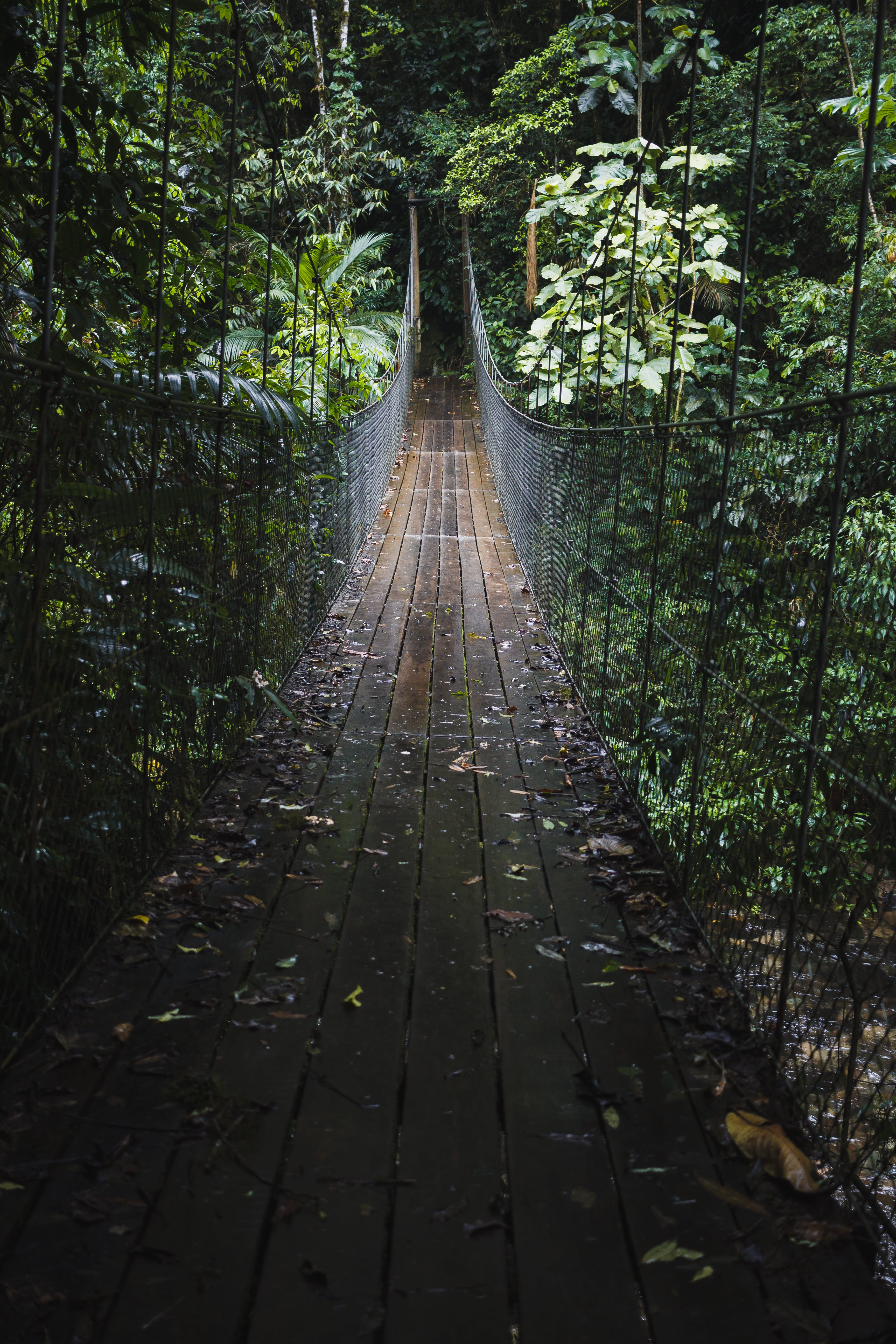 zu bäume, brücke, dschungel, hängebrücke