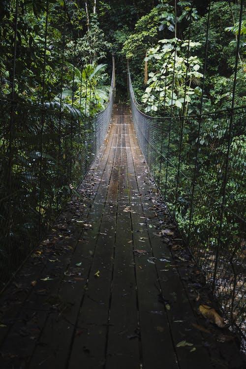 Ilmainen kuvapankkikuva tunnisteilla puut, sademetsä, silta, viidakko