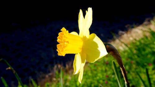 fulya, sarı içeren Ücretsiz stok fotoğraf