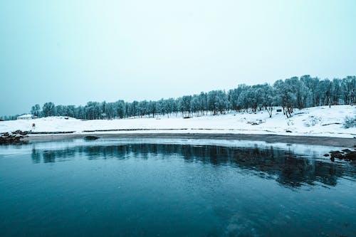 Безкоштовне стокове фото на тему «вода, дерева, застуда, зима»