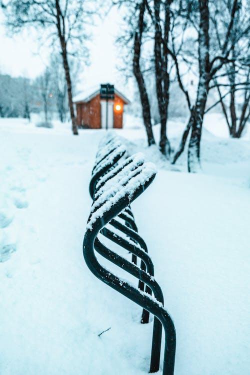 Imagine de stoc gratuită din anotimp, congelat, frig, iarnă