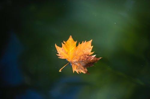 Foto d'estoc gratuïta de a l'aire lliure, aigua, brillant, colors