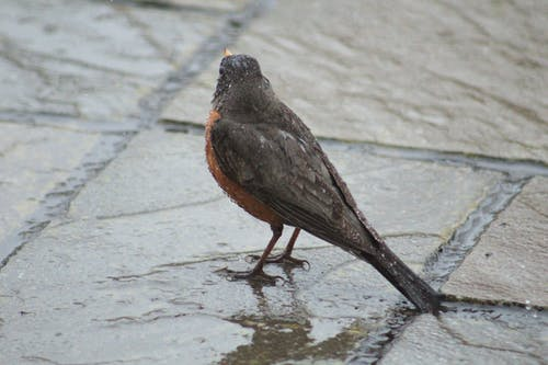 Základová fotografie zdarma na téma ptačí perspektivy
