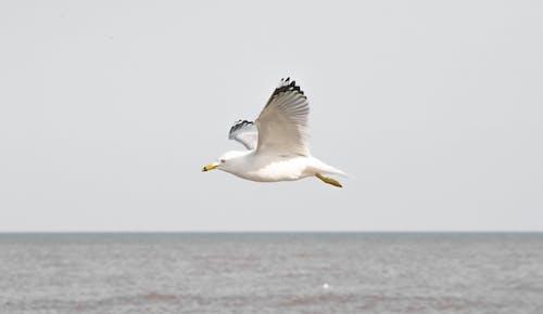 물새의 무료 스톡 사진