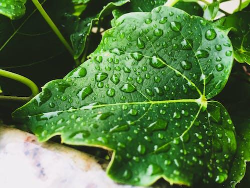 增長, 外来植物, 天性, 工厂 的 免费素材照片
