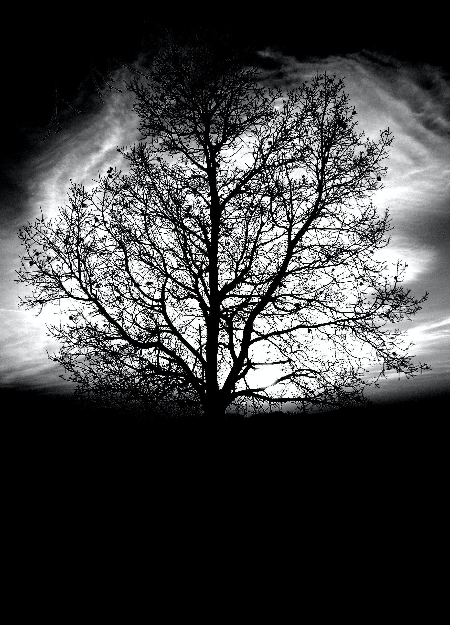 black and white, dark, environment