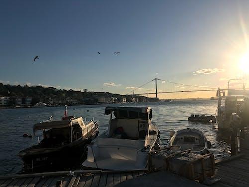 Imagine de stoc gratuită din barcă cu motor, bărci de pescuit